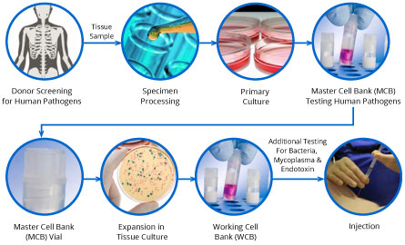 Cell-Manufacturing_StemIntl